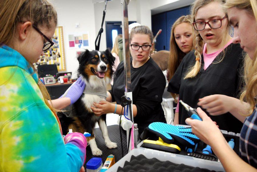 Students+prepare+to+begin+grooming