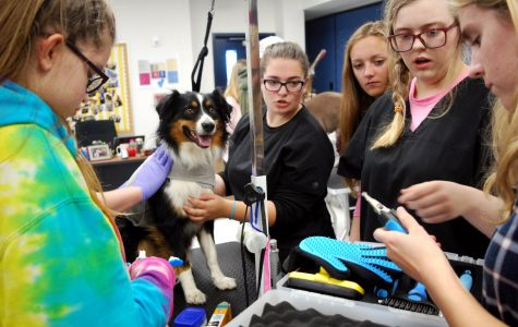 Animal Science classes start a dog-grooming service